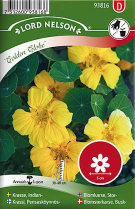 krasse-busk--golden-globe-gul-1
