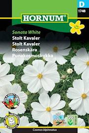rosenskra-sonata-white-1