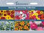 sommarblommor-mix-butterflt-attracting-ettrig-1
