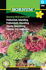 zinnia-blandning-queeny-red-and-lime-1