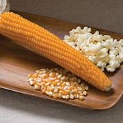 336-popcornmajs-robust-997-f1-1