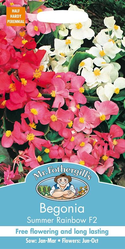 Begonia 'Summer Rainbow F2