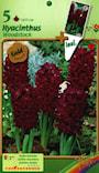 hyacint-woodstock-2