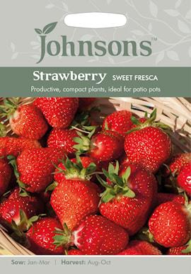 jordgubbe-sweet-fresca-1