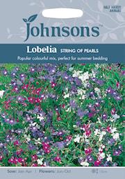 lobelia-string-of-pearls-1