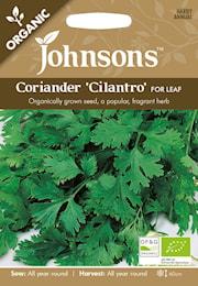 koriander-cilantro-organic-1