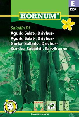 gurka-sallads--drivhus--1