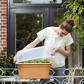 green-basics-grow-house-flower-bridge-55cm-1