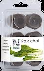 hydroponisk-easy-to-grow-pak-choi-1