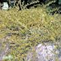 krypvide-grey-carpet-e-7cm-kruka-2