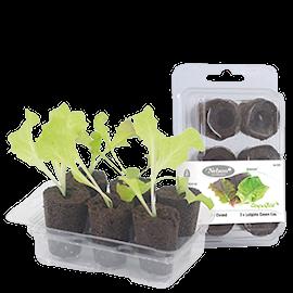 easy-to-grow-romansallat-1