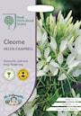 paradisblomster-cleome-helen-campbell-1