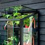 odlingsskp-city-green-house-hrdat-glas-3