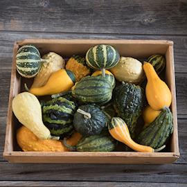 349-prydnadspumpa-ornamental-gourds-1