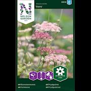 blomstermorot-dara-1