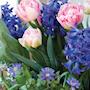 lm-romantic-garden-mix-23st-2