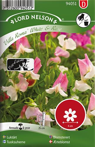 Luktärt 'Villa Roma' White & Rose
