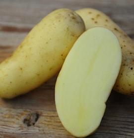 ekologisk-potatis-amandine-1kg-1