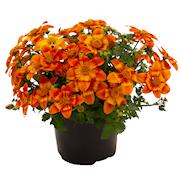ampelskra-bee-happy-orange-105cm-kruka-1