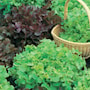 sallat-salad-bowl-red-green-3