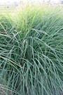 glansmiskantus-kleine-silberspinne-3st-barrot-2