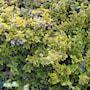 kltterbenved-emeraldn-gold-2-3l-5