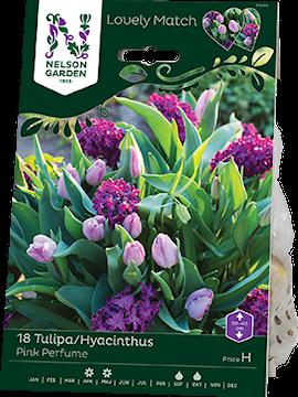 tulpanhyacint-mix-lm-pink-perfume-18st-1