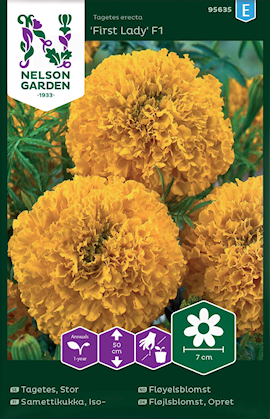 tagetes-stor--inca-goldfirst-lady-f1-1