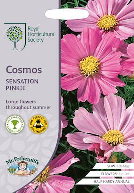 rosenskra-cosmos-sensation-pinkie-1