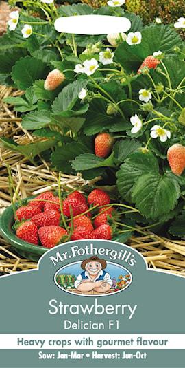 jordgubbe-delician-f1-1
