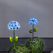solcellsdekoration-hortensia-bl-1