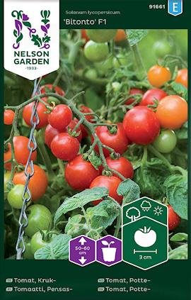 tomat-kruk-bitonto-f1-1