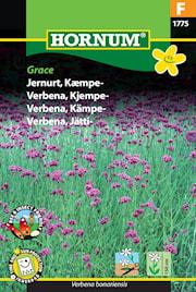 jtteverbena-grace-1