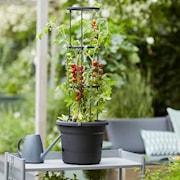 tomat-kruka-33cm-1