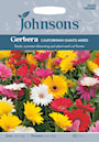 gerbera-californian-giants-mixed-1