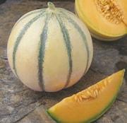 cantaloupemelon-ardor-105cm-kruka-1