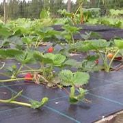 plantfolie-10-x-15m-1