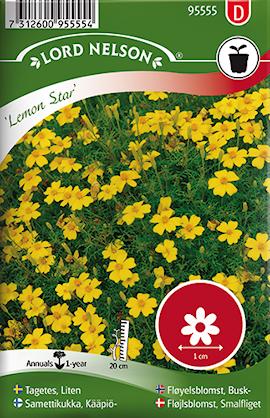 tagetes-liten-lemon-star-1