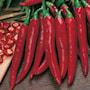 chili-hot-rokita-6
