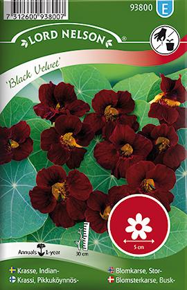 krasse-busk--black-velvet-1