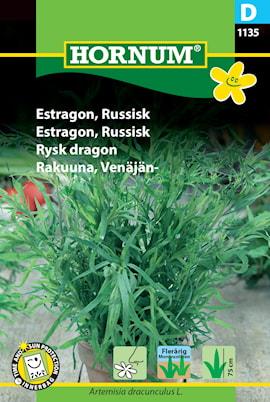 rysk-dragon-1