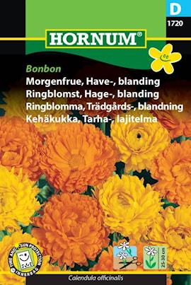 ringblomma-trdgrds--blandning-bonbon-1