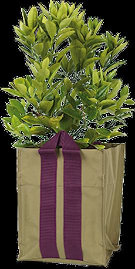 plantkasse-blueberry-small-army-10l-1