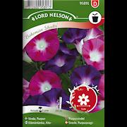 vinda-purpur--bohemian-shades-1