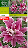lilja-sweet-rosy-4