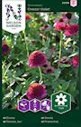 zinnia-cresto-violet-1
