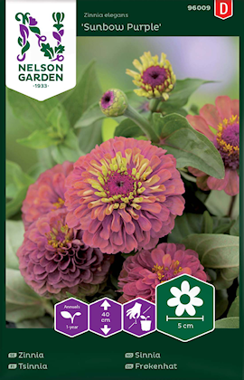 zinnia-sunbow-purple-1