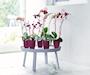 orchideco-elegance-lime-2