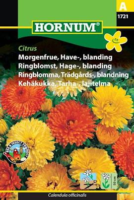 ringblomma-trdgrds--blandning-citrus-1