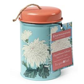 snre-p-burk---chrysanthemum-1